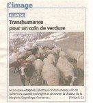 imge-agnes-mouton-136x150